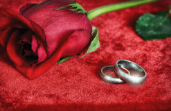 Rose and Sparkling Wedding Rings Stock Images