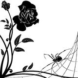 Rose and spider Stock Image