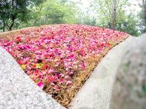 Rose Spread sulla tomba Fotografie Stock Libere da Diritti