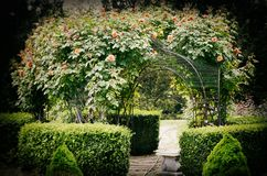 Rose Spring Garden Fotografia Stock Libera da Diritti