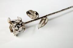 rose srebra Zdjęcia Stock