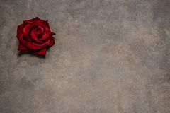Rose  of St. Valentine`s on a rusty background. Rose  of St. Valentine`s on a rusty vintage background.The flower of love Royalty Free Stock Images