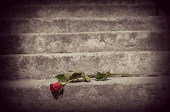 Rose on the stairs Stock Image