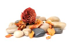 Rose and stone Royalty Free Stock Images