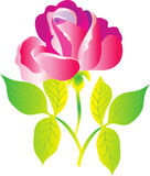 Rose. A stylized illustration of a beautiful pink red rose with pale green leaves Stock Photos
