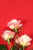 Rose su colore rosso immagini stock