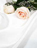 Rose su fondo di seta bianco Fotografie Stock Libere da Diritti