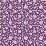 Rose su fondo viola Reticolo senza giunte floreale Illustrazione di matita Immagine Stock