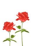 Rose su un fondo bianco con spazio per testo Illustrazione di vettore Royalty Illustrazione gratis