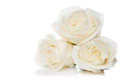 Rose su una priorità bassa bianca Fotografie Stock Libere da Diritti