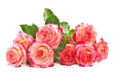 Rose su una priorità bassa bianca. fotografia stock