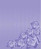 Rose su una priorità bassa lilla in una striscia illustrazione di stock