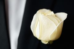 Rose on the suit of groom Royalty Free Stock Images