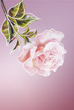 Rose. Summer flowers invitation Stock Photo