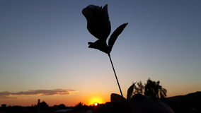 The rose and the sun. Sunset with rose Royalty Free Stock Images