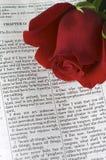 Rose sur la bible Image libre de droits