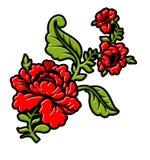 Rose sur la branche sur le fond blanc Éléments floraux d'isolement Images stock