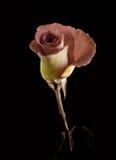 Rose sur la cheminée Photos stock
