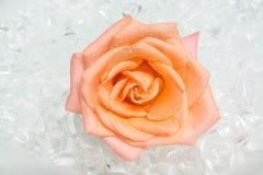 Rose sur la glace Image stock