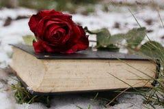 Rose sur la neige photos libres de droits