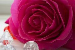 Rose sur la photo de fenêtre Photographie stock