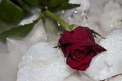 Rose sur la pierre Images stock