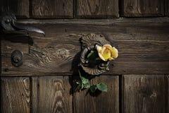 Rose sur la porte rustique Photographie stock