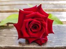Rose sur le bois Photographie stock libre de droits