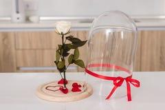 Rose sur le fond blanc Images stock