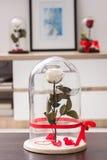 Rose sur le fond blanc Photographie stock