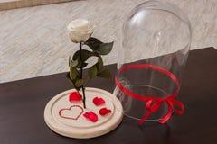Rose sur le fond blanc Photo libre de droits