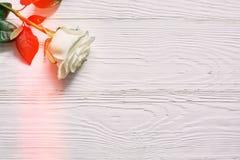 Rose sur le fond en bois blanc Placez une inscription, un texte ou un m Images stock