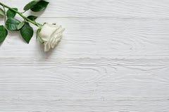 Rose sur le fond en bois blanc Placez une inscription, un texte ou un m Photo stock