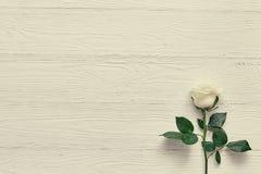 Rose sur le fond en bois blanc Placez une inscription, un texte ou un m Photos stock