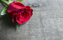 Rose sur le fond en bois pour le jour du ` s de Valentine avec l'espace de copie Valentine Rose Photos stock