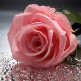 Rose sur le fond humide Images stock
