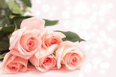 Rose sur le fond rose photographie stock libre de droits