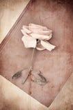 Rose sur le livre photo stock