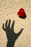 Rose sur le mur Images stock