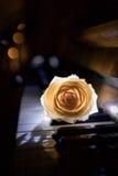 Rose sur le piano Photographie stock libre de droits