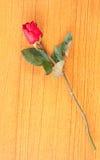 Rose sur le pot Images libres de droits