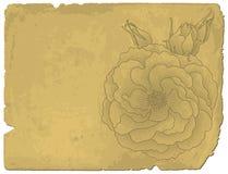 Rose sur le vieux papier Photo stock
