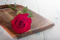 Rose sur les conseils Photos libres de droits