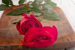 Rose sur les conseils Images stock