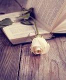 Rose sur un livre dans un style de vintage. Image stock