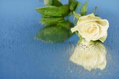 Rose sur un miroir Photo stock