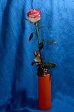 Rose sur une tige dans un vase Photo libre de droits