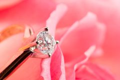 Rose with a surprise. Romantic way to present a engagement ring with diamond inside beautiful rose on Valentine day stock photo