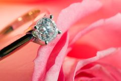 Rose with a surprise. Romantic way to present a engagement ring with diamond inside beautiful rose on Valentine day Stock Images