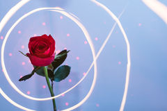 Rose surrounded with light Royalty Free Stock Photography